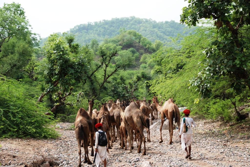 Nomads of India